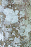 Detailed tree bark texture. Nature wood Stock Photography