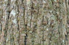 Detailed tree bark texture. Nature wood Stock Photo