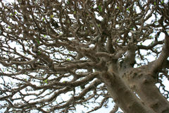 Detailed tree branches Royalty Free Stock Photography
