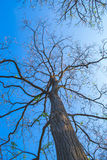 Detailed tree branches. On natural background and blue sky Stock Photo