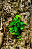 Detailed trunk sprouting new life Royalty Free Stock Image