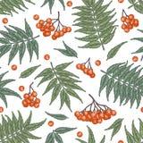 Engraving autumn rowanberry seamless pattern. stock photos
