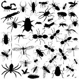 Detailed Vectoral Bug Silhouettes Royalty Free Stock Images