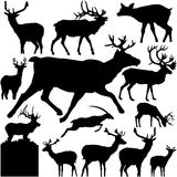 Detailed Vectoral Deer  Silhouettes Royalty Free Stock Images