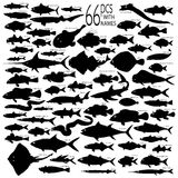 Detailed Vectoral Fish Silhouettes. 66 pieces of detailed vectoral fish silhouettes. Jpeg involves paths. Illustrator .ai file included Stock Image