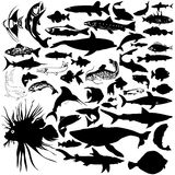 Detailed Vectoral Sea life Silhouettes. 46 pieces of detailed vectoral fish and sea animals silhouettes. Jpeg involves paths. Illustrator .ai file included Stock Photography