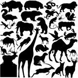 Detailed Vectoral Wild Animals Silhouettes. 42 pieces of detailed vectoral wild animals silhouettes. Jpeg involves paths. Illustrator .ai file included Stock Photo