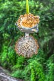 Detailed view of a baobab flower royalty free stock photos