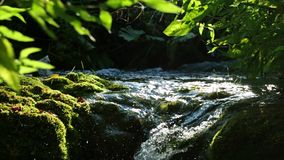 Detailed view of the beautiful waterfalls in Plitvice National Park, Croatia stock video footage