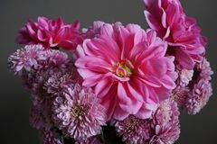 Pink dahlias with yellow centre and chrysanthemum flowers. Detailed view of a bunch of pink dahlias flowers with yellow centre and pink  chrysanthemums on a grey Stock Photos