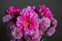 Pink dahlias with yellow centre and chrysanthemum flowers Royalty Free Stock Images