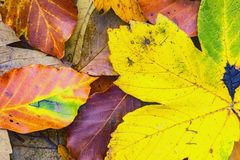 Different types of autumn leaves Stock Photos