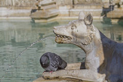 Detailed view of the Fonte Gaia Stock Photos