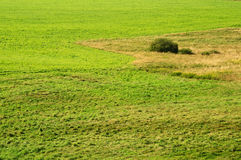Detailed view of green meadow Royalty Free Stock Image
