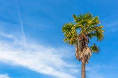 Detailed view of a palm tree with blue sky with clouds royalty free stock photography
