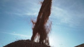 Detailed view of a steady stream of grains wheat from combine into truck container stock footage