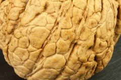 Detailed view of the structure of the shell of a walnut. Super foods for human brain. Healthy walnuts. Stock Photo