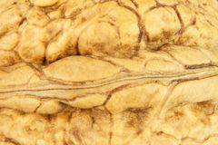 Detailed view of the structure of the shell of a walnut. Super foods for human brain. Healthy walnuts. Royalty Free Stock Photos