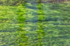 Detailed view of texture of green seaweed under river water stock images
