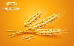 Detailed wheat ears, oats or barley isolated on a yellow background. Natural ingredient element. Healthy food or. Agriculture, bread or crop theme. Vector vector illustration