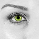 Detailed woman green eye close up Stock Photos