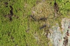 Detailentwurf Moss Nature-Baumrindebeschaffenheitsmuster-Hintergrundtapete lizenzfreies stockbild