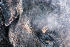 Detailfoto van olifantsgezicht, dierlijk thema stock afbeelding
