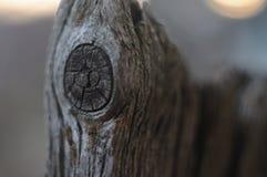 Detailmakrofoto des natürlichen hölzernen Chips stockbilder