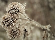 Details of the arrival of winter flowers are thistle royalty free stock photos