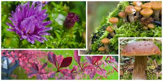 Details of autumn Royalty Free Stock Image