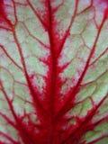 Details back of leaf Royalty Free Stock Image