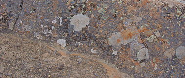 Details, brightly colored lichen on volcanic boulde Stock Image