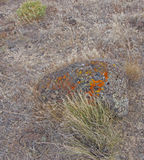 Details, brightly colored lichen on volcanic boulde. R, Diamond Craters Outstanding Natural Area, Malheur, Oregon Stock Photo