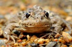 Frog eyes detail Stock Image