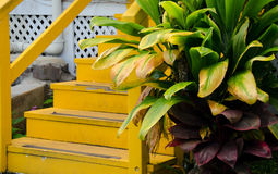 Details of a colorful house in Kapaau village Royalty Free Stock Photo