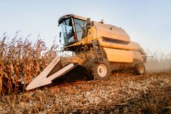 Combine harvesting. Industrial agricultural machinery working the fields and harvesting corn crops. Details of combine harvesting. Industrial agricultural stock image