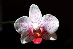 Details der Blume in der Blüte Stockbild