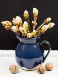 Details der Kastanie knospt in einem keramischen Topf Lizenzfreies Stockfoto