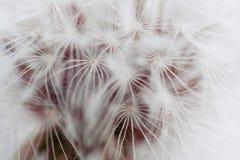 Details der Natur Lizenzfreie Stockfotos