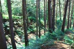 Details des Waldes Stockfoto