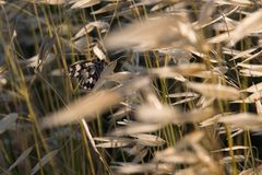 Details of dried grass. A closeup of dried grass blowing in the wind Stock Photos
