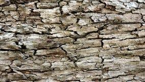 Details einer festen rustikalen Struktur ausgesetzt dem Klima Hintergrund, Beschaffenheit und Details Stockfoto