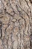 Details eines Baumstammes stockbild