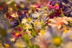 Details fake flowers on the abstract background blurred Photo stock