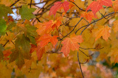Details Fall color Stock Images