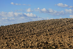 Details of farmland in Tuscany Royalty Free Stock Photos