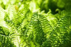Details of the fern grasses in the spring forest Stock Photos