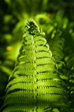 Details of the fern grasses in the spring forest Stock Photography