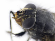 Details of a fly stock photo