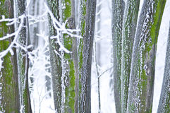 Details of forest in winter Stock Photos